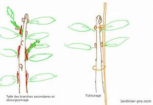 Comment Tailler Un Abricotier : tailler le cerisier ~ Melissatoandfro.com Idées de Décoration