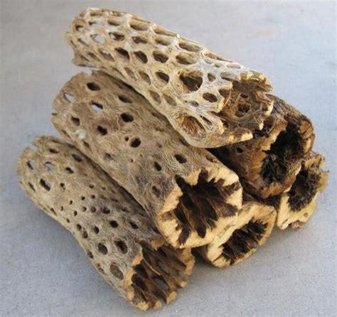 cholla cactus wood ls cholla cactus wood small