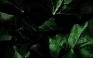 dark green leaves - Background Wallpapers for your Desktop ...