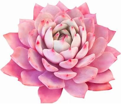 Picsart Flower Pink Sticker Chill
