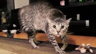 scaredy cat scaredy cat
