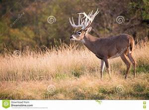 Huge Non-typical Whitetail Buck Stock Image - Image of ...