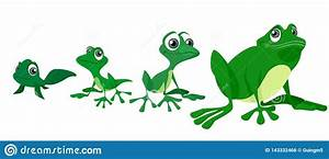 Life Cycle Of Frog Vector Illustration