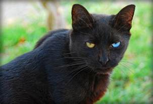 pictures of black cats black cats are awesome here are 32 of them