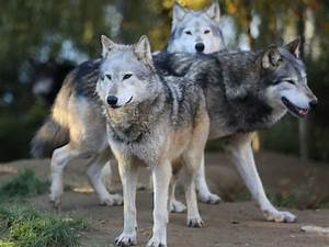 Image Gallery omnivore animals