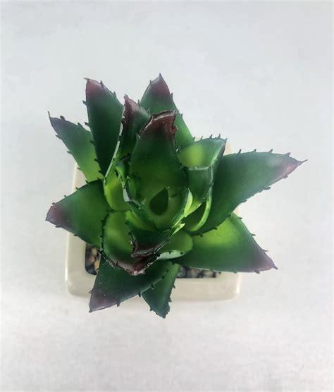 ไม้อวบน้ำปลอม(เฉพาะหัวไม่รวมกระถาง) พืชฉ่ำน้ำ succulent ...