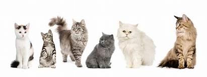 Katten Een Groep Gatti Cats Chats Rij