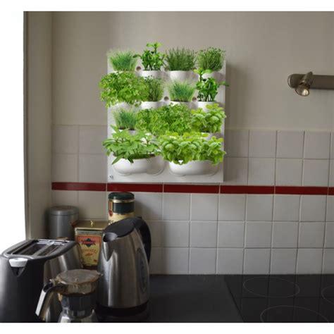 herbes aromatiques en cuisine potager mural pour herbes aromatiques