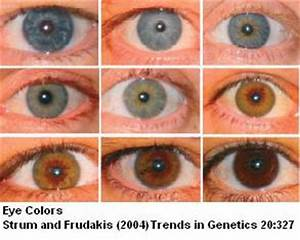 Sandwalk: The Genetics of Eye Color