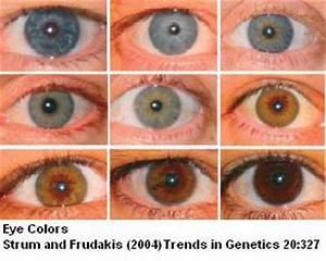 Sandwalk: The Genetics of Eye Color