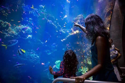 steinhart aquarium california academy  sciences