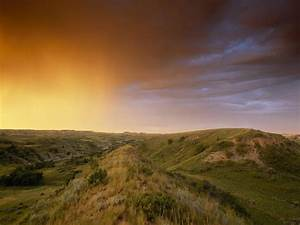 Grasslands Information And Facts National Geographic