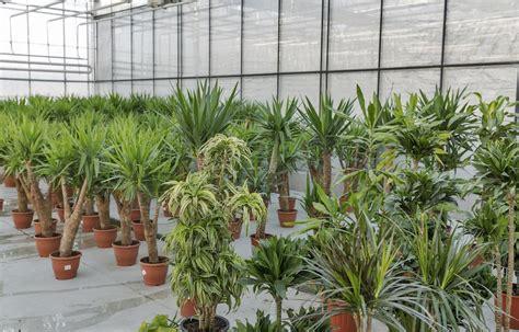 toxic houseplants  avoid    pets