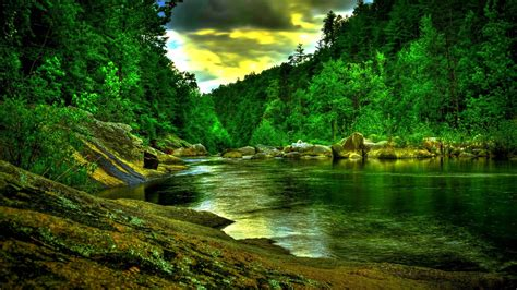 green forest wallpaper river s edge beautiful green forest river wide Beautiful