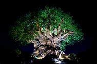 Disney Animal Kingdom Tree of Life Night
