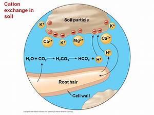 Soil And Plant Nutrition - Presentation Biology