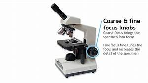 28 Parts Of A Compound Light Microscope Worksheet