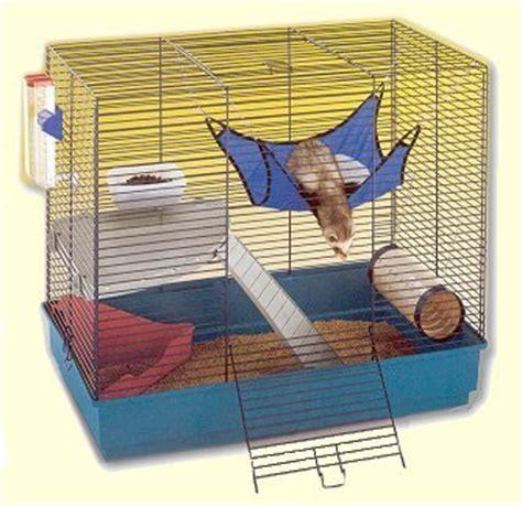 jeux de rat quels jeux pour un rat question rat wamiz