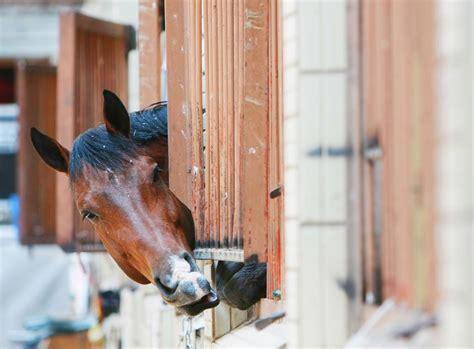 Wie Reinige Ich Meine Pferdebox Richtig? » Tierheilkunde