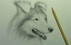 Zeichnungen Mit Bleistift Für Anfänger : hunde zeichnen f r anf nger zeichnen lernen dekoking com 3 zeichnen malen zeichnen ~ Frokenaadalensverden.com Haus und Dekorationen