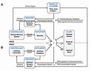 Schematic Block Diagram Of The Human Movement Control