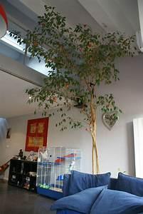 Arbre D Intérieur : mon petit jardin int rieur du bonheur en b ton ~ Preciouscoupons.com Idées de Décoration
