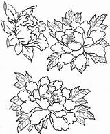 Embroidery Patterns Peony Coloring Flower Pages Tattoo Designs Drawings Peonies Painting пионов Tracing Fabric рисунки Drawing Silk Floral Flowers пионы sketch template