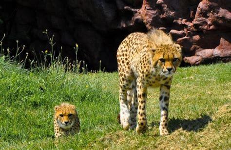 zoo toronto zoos most canada ontario