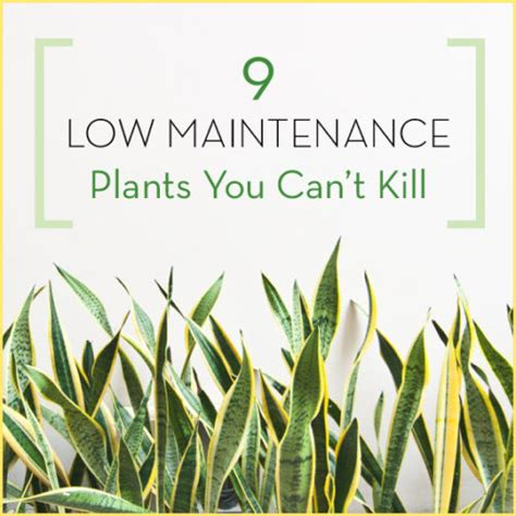 low maintenance plants outdoor 9 low maintenance plants you can t kill get healthy u