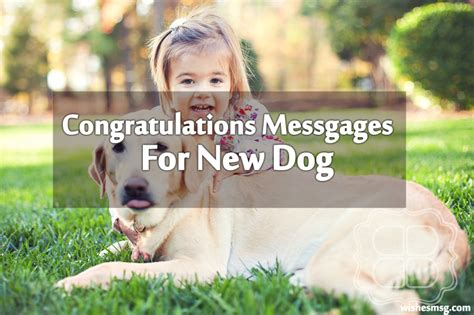 congratulations messages   dog wishesmsg