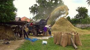 Threshing Rice - Laos