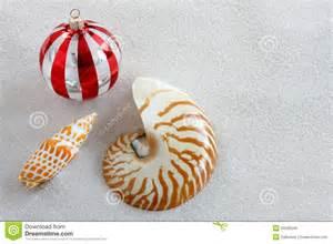 florida christmas ornaments on white sand stock photo image 20596246
