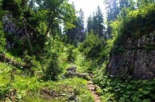 Wilderness Scenery Path