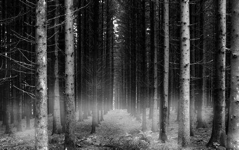 Download Free Black And White Forest Wallpaper