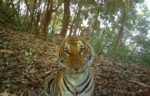 Illicit Wildlife Trade in Southeast Asia WildCats