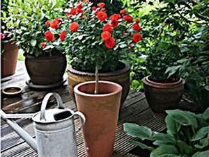 Immergrüne Winterharte Kübelpflanzen : winterharte k belpflanzen wien magazin ~ Michelbontemps.com Haus und Dekorationen