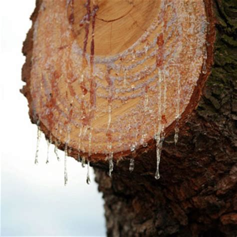 remove tree sap    mayonnaise   house
