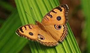 Top 10 Most Beautiful Butterflies In The World With Details