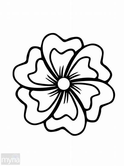 Coloring Flowers Simple Adult Pages Books Myria