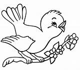 Coloring Bird Pages Birds Kind Cuckoo Knowing sketch template