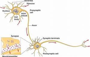 Artificial Neural Networks  Ann