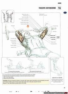 Training Anatomy - Arms