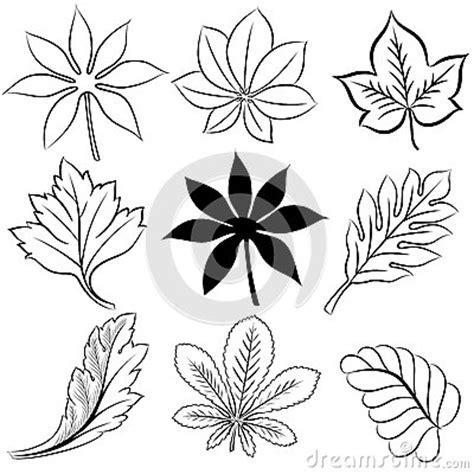 Hand Gezeichnete Blätter Eingestellt Vektor Abbildung