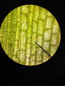 Seventh Grade Lesson Eukaryotes And Prokaryotes