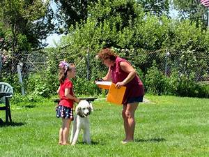 youth dog training camp with our poodle dash With dog training camp