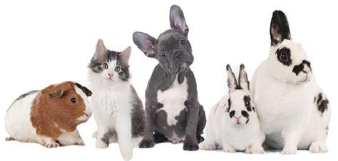 Haustiere Fuer Kinder by Die Richtigen Haustiere F 252 R Kinder Hund Vs Katze