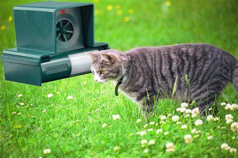 katzen aus garten vertreiben katzen mit ultraschall vertreiben
