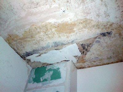 schimmelgeruch schlafzimmer chaetomium wasserschaden muffiger schimmelgeruch