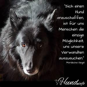 Hundesprüche ⋆ Hunde