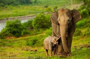 Sumatra the Final Stand for Endangered Animals – Berdiri ...